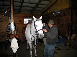 Horse boarding, NJ, concierge service, riding lessons